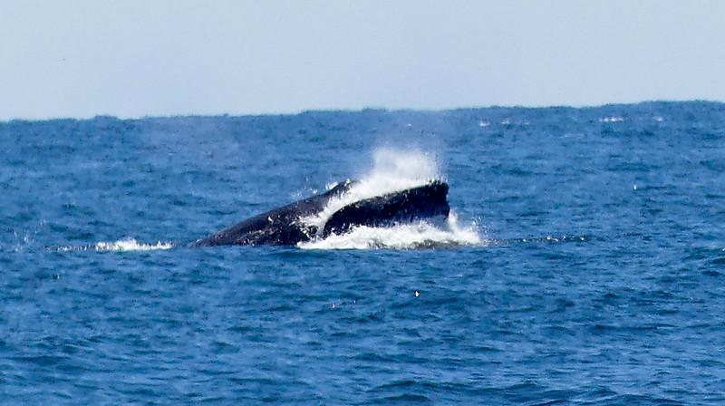 A whale06