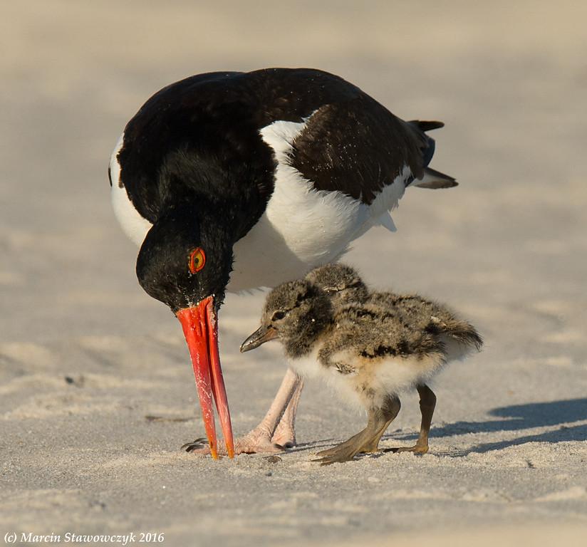 Feeding lesson