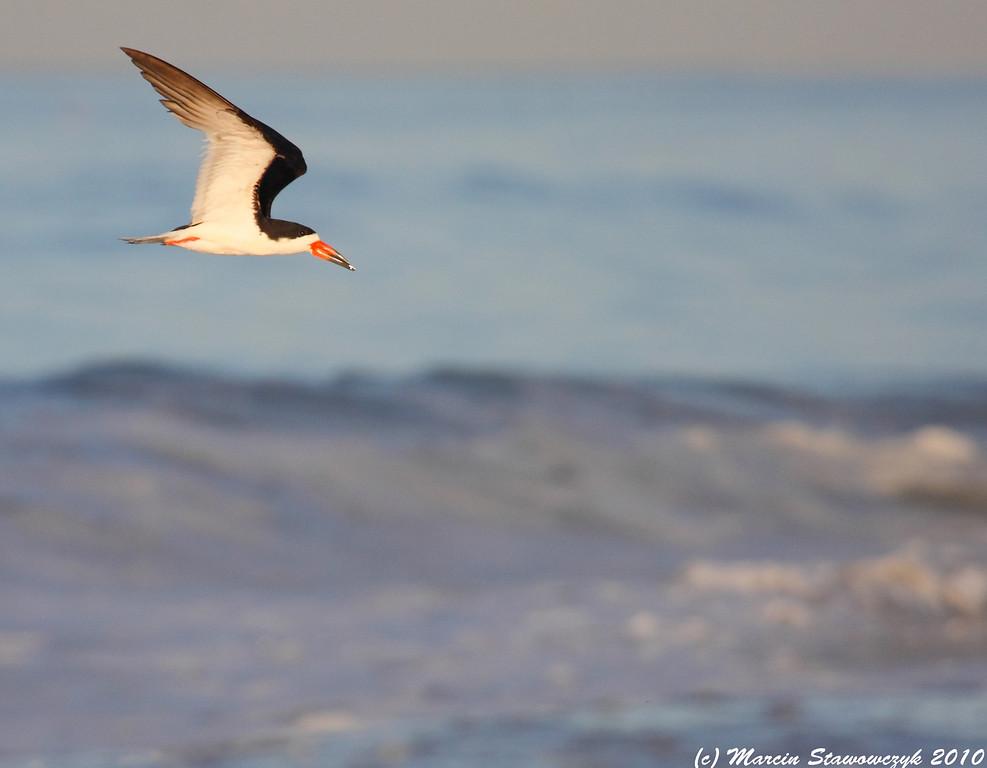 Skimmer over the waves