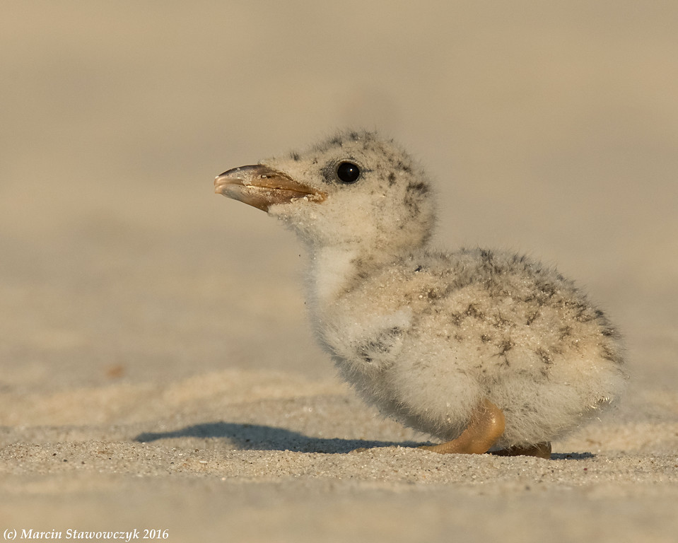 Baby on the sand