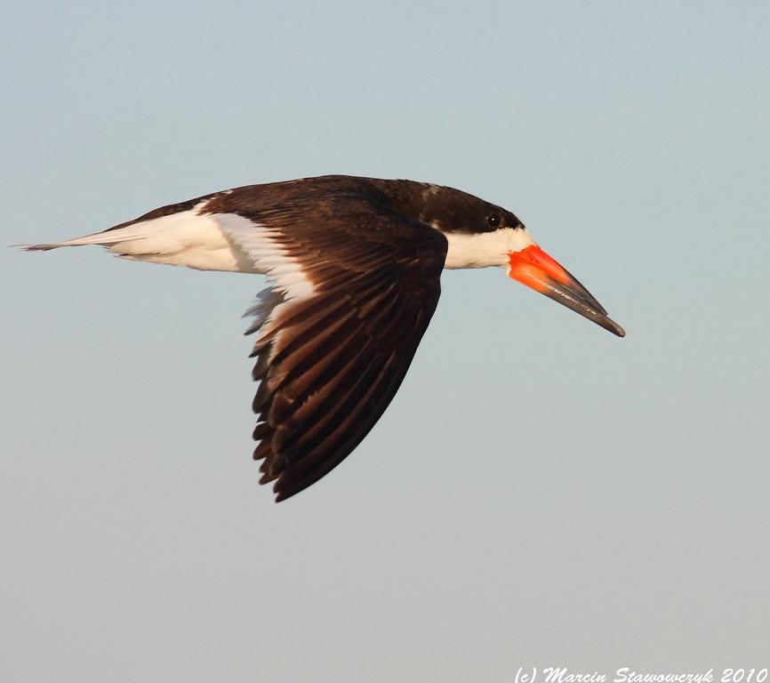Flying skimmer