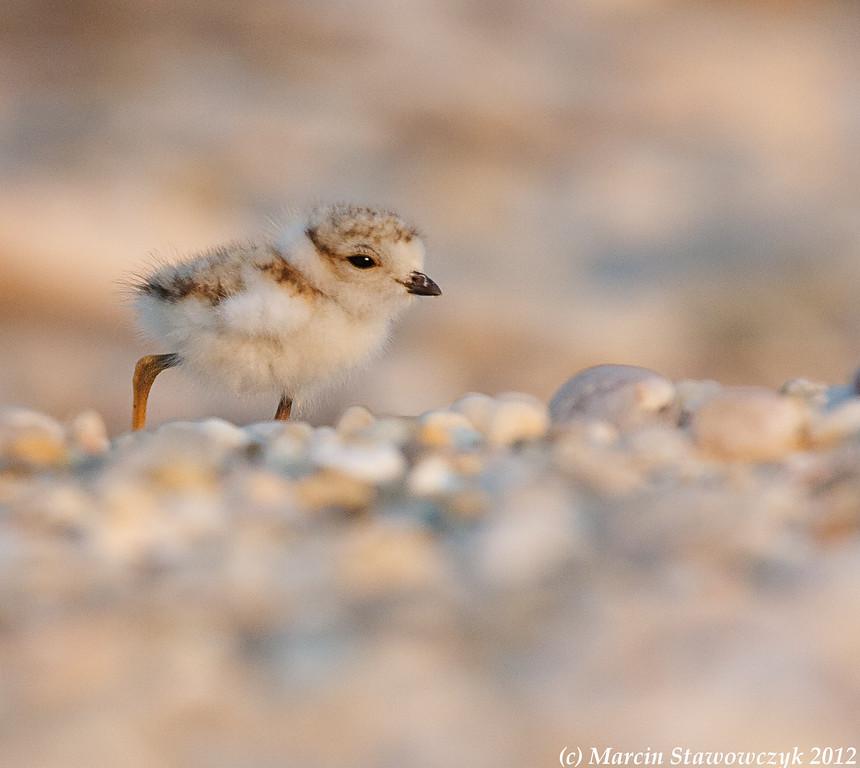 Tiny explorer