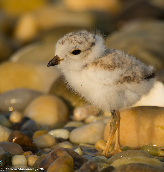 Small and fluffy