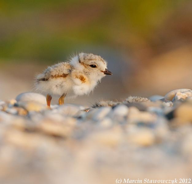 The tiny one