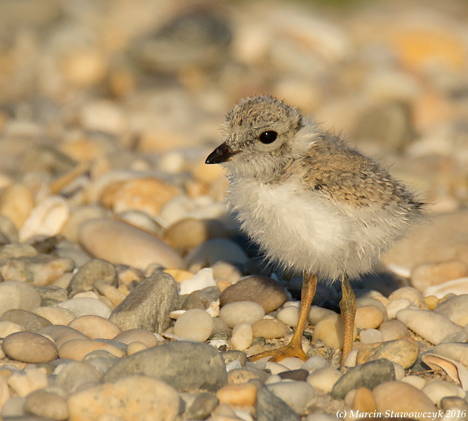 Youngster on the gravel