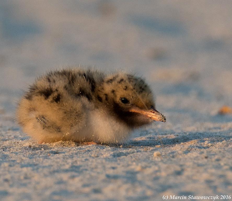 Tiny on the sand