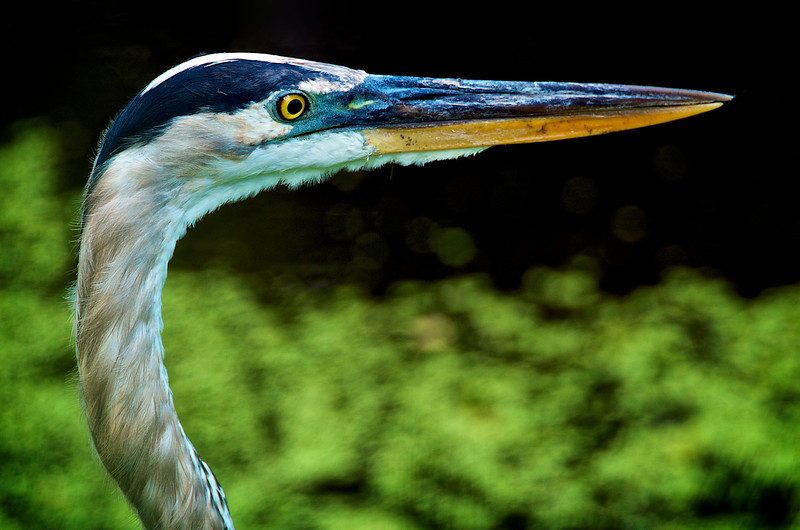Heron's Eye View