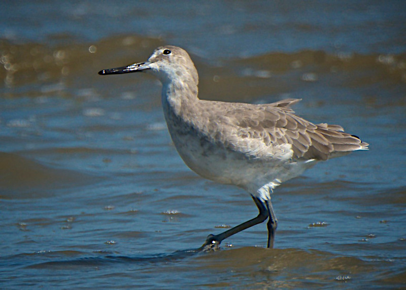 Willet Come After Me?