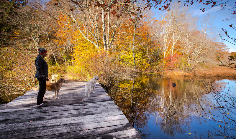 Young's Pond Branford-8315