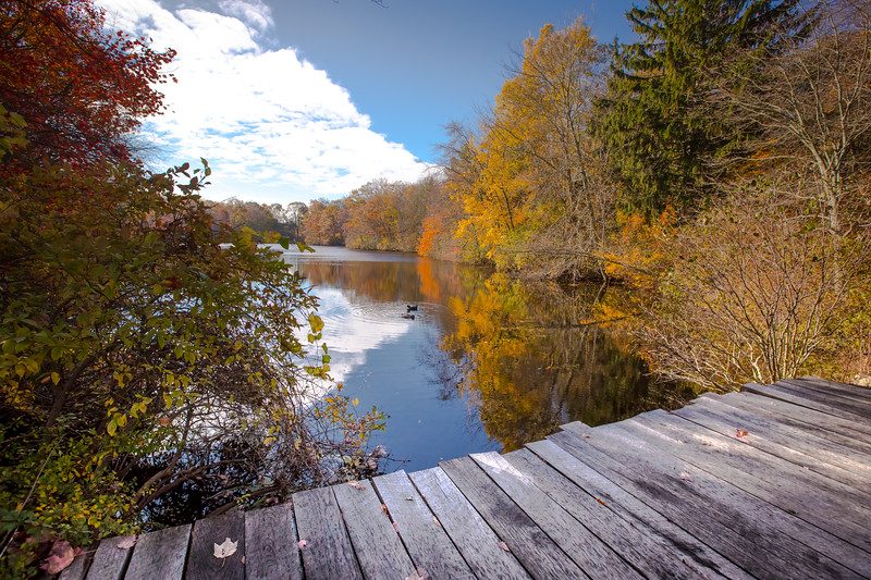 Young's Pond Branford-8289