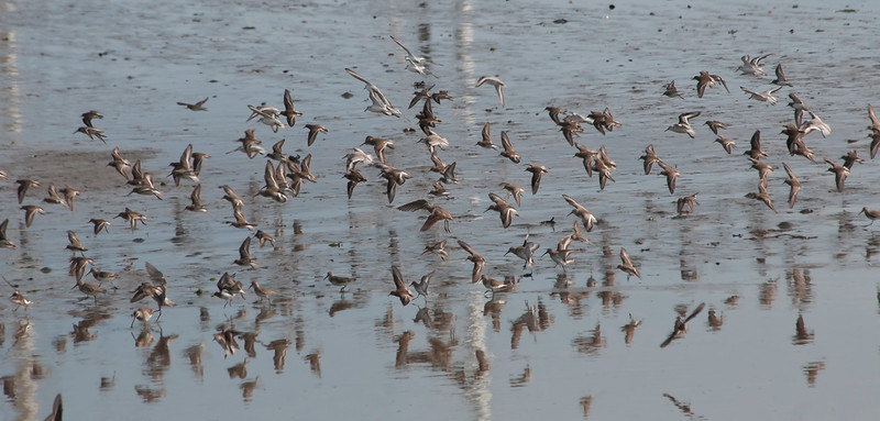 Lots of Willets and more