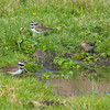 September Ranch<br /> October 30th<br /> Killdeer and Snipe