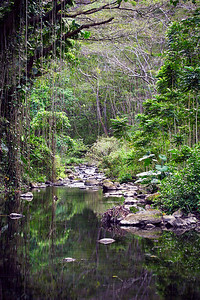 Vibrant foliage reflects off a still stream in Waipio Valley, Big Island, Hawaii