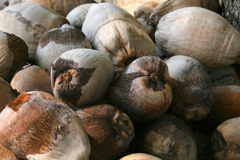 Coconuts, Big Island, Pacific