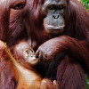 Motherly Love, Singapore Zoo