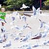 0906 seagull boy 4