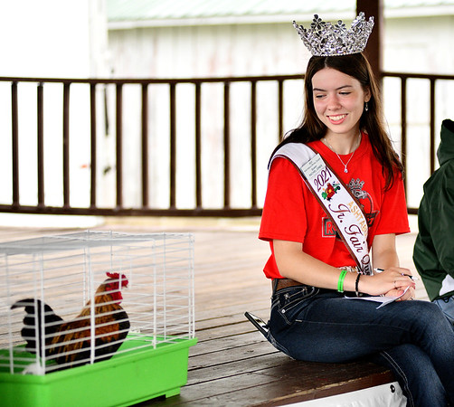 WARREN  DILLAWAY   Star Beacon <br /> Ashtabula County Fair Queen Rachel Jones counts crows during the rooster crowing contest on Thursday morning at the Ashtabula County Fair in Jefferson.