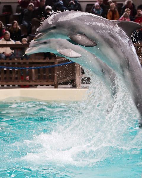 Delfin/Dolphin