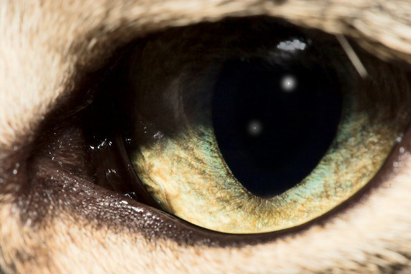 A close-up on Oskar's eye.