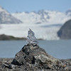 Glacial ice on the rocks, Grewingk Glacier, Alaska