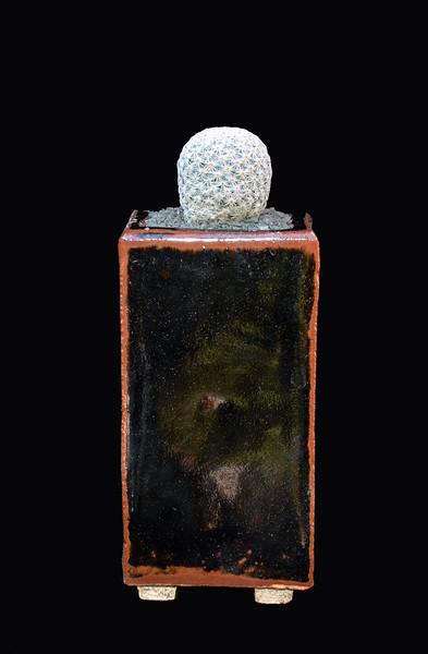 Mammillaria herreae