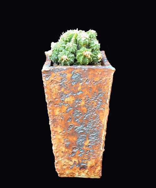 Aztekium ritteri