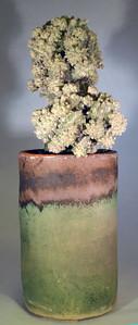 Astrophytum 'Lotusland'