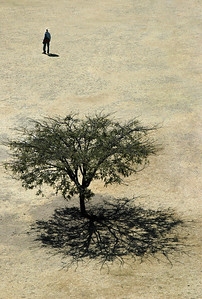 Man and Tree