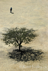 Man and Tree. Shade tree at Monte Alban in Oaxaca, Mexico . © Rob Huntley