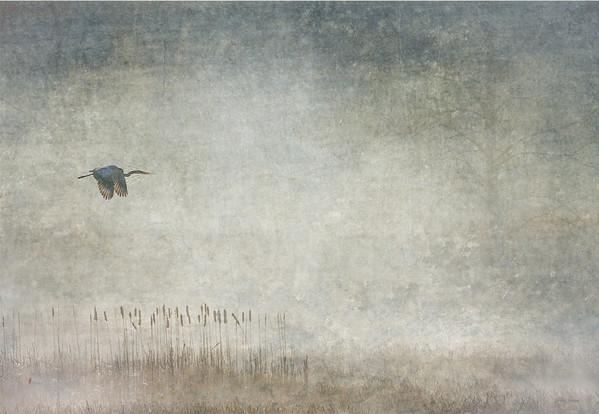 Blue Heron and Fog