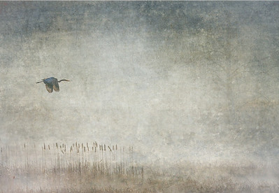 Blue Heron and Fog