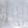 First Snow 2020