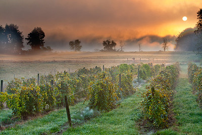 Sunrise at Wolf Creek Winery