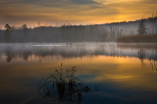 Beaver Marsh<br /> Cuyahoga Valley National Park