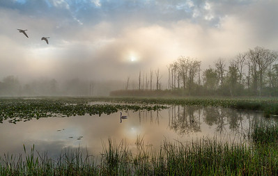Foggy Sunrise at Beaver Marsh