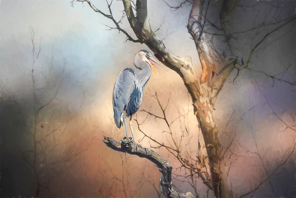 Blue Heron on Sycamore