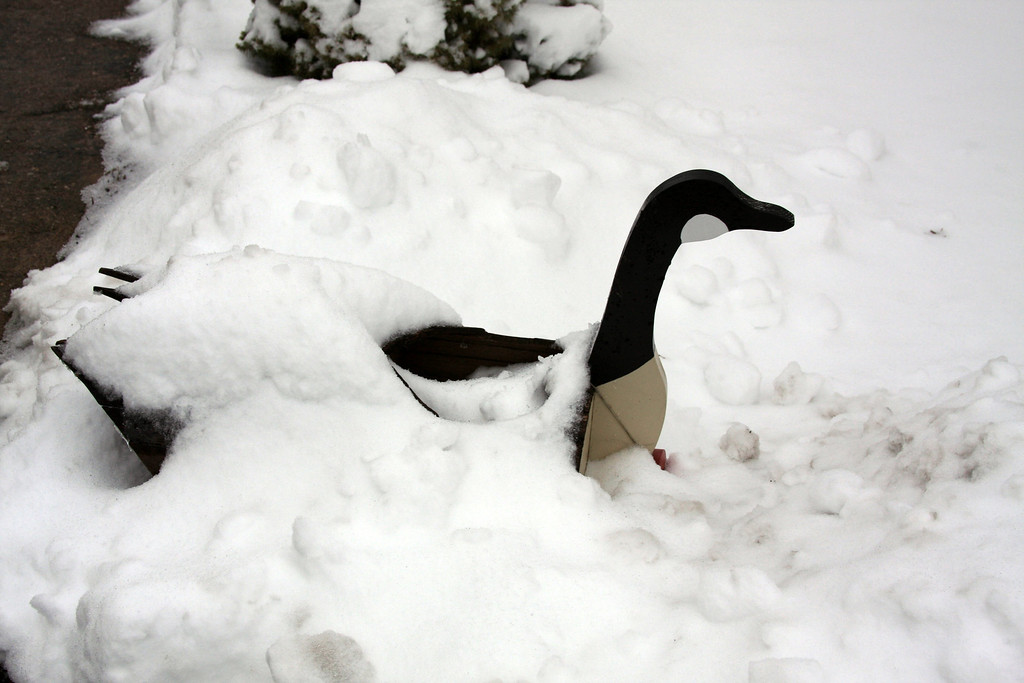Cold duck!