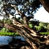 March 2012 - Centennial Park, Sydney