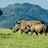 Jan 2012 - Pilansberg game reserve, South Africa
