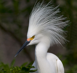 DON KING of the bird world