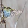 All a flutter !