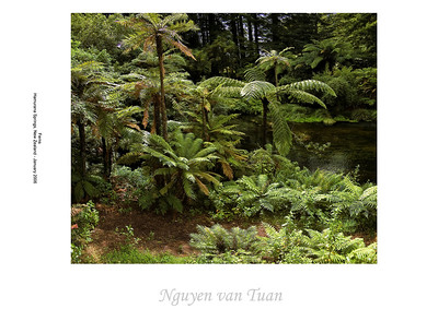 Ferns Hamurana Springs New Zealand - January 2006