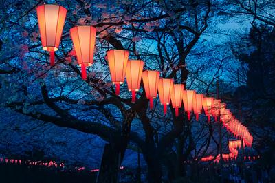 Cherry-Blossom Viewing (O-Hanami) Festival at Ueno Park, Tokyo, Japan