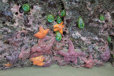 Tidepool life, Bandon Beach, Oregon, USA