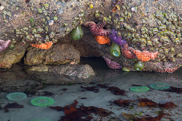 Tide pool, Olympic National Park, Washington