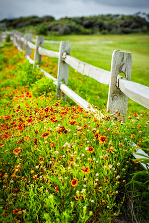 Wildflower Fenceline
