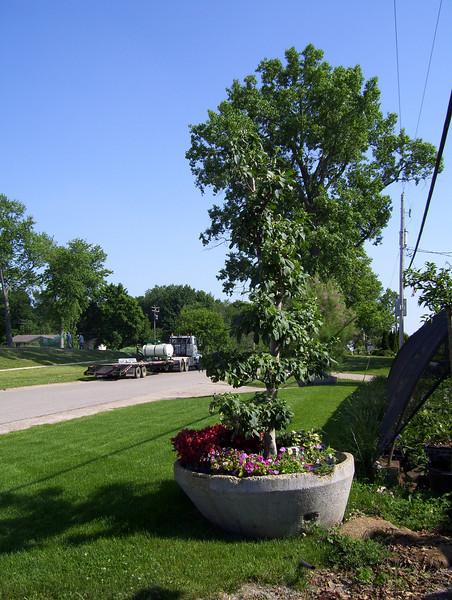 Plant Holding Area