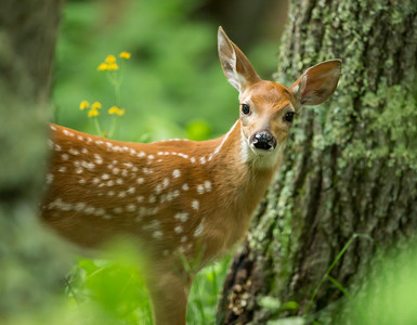 """A Fawn in the Forest"""
