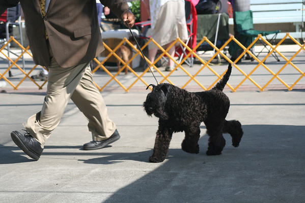Richmond Dog Fanciers 2011