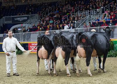 petitclerc_breeders_herd_625